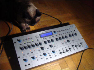 cat on synth!
